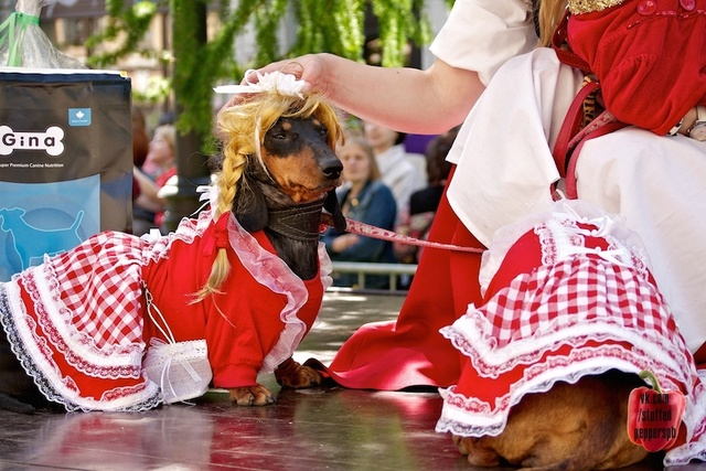 BaDoGood плохая-хорошая собака - Портал 02210
