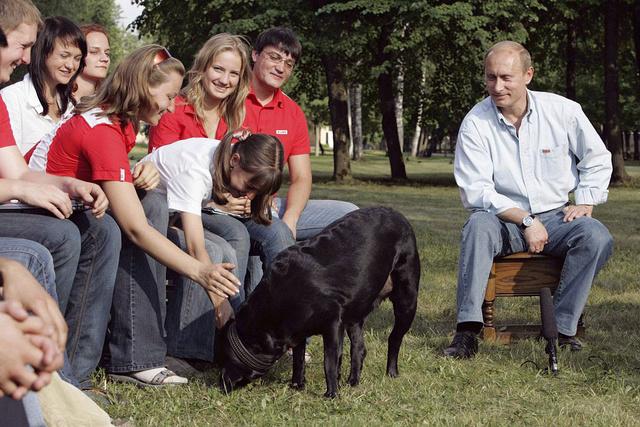 BaDoGood плохая-хорошая собака - Портал 11444410