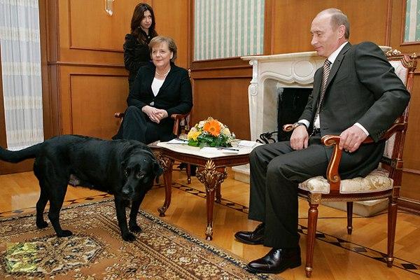 BaDoGood плохая-хорошая собака - Портал 22443810