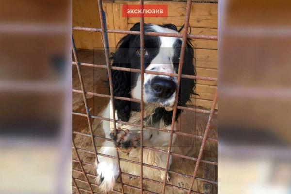 Кинологи подмосковного МВД пожаловались на плохое состояние служебных собак 33bfae10