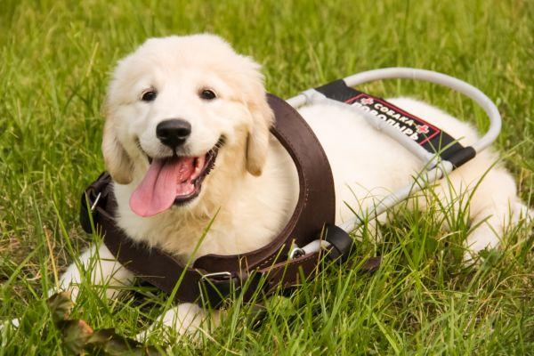 BaDoGood плохая-хорошая собака - Портал 5ee87310