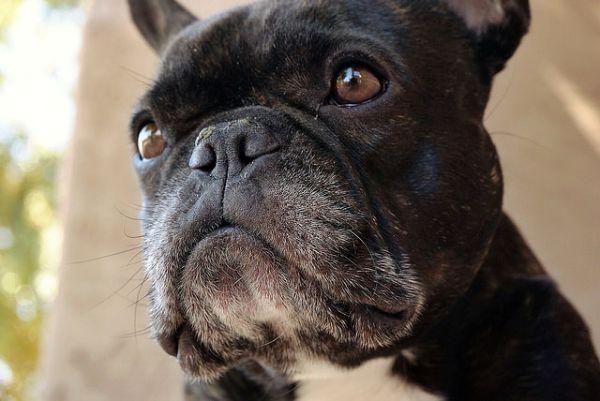 BaDoGood плохая-хорошая собака - Портал 78911
