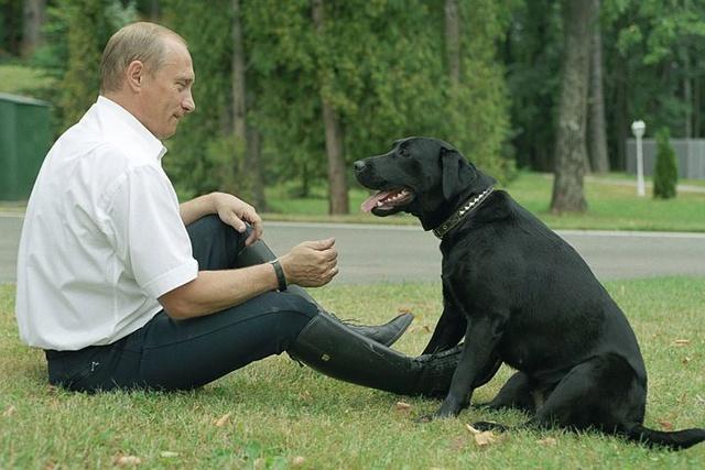 BaDoGood плохая-хорошая собака - Портал Big10