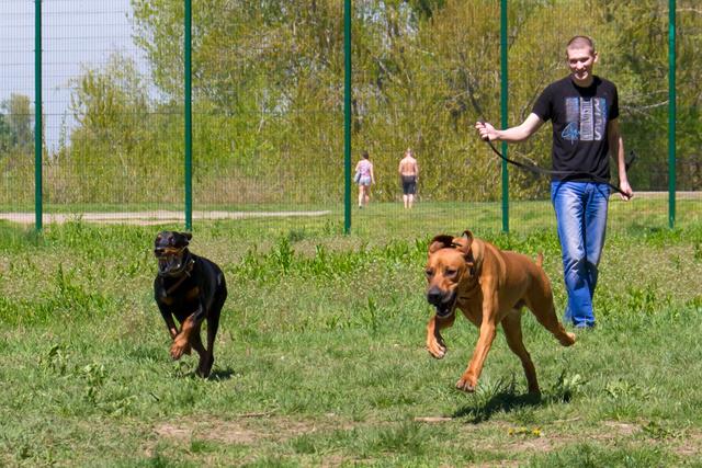 Курсинг. Собачий спорт Dsc_0011