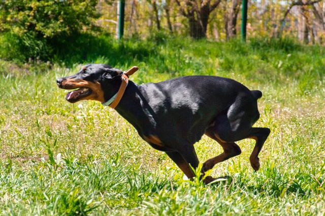Курсинг. Собачий спорт Dsc_0012