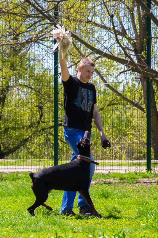 Курсинг. Собачий спорт Dsc_0014