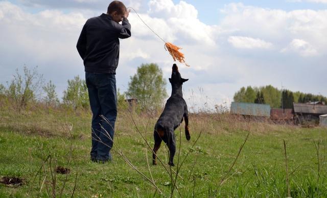 Курсинг. Собачий спорт Dsc_0112