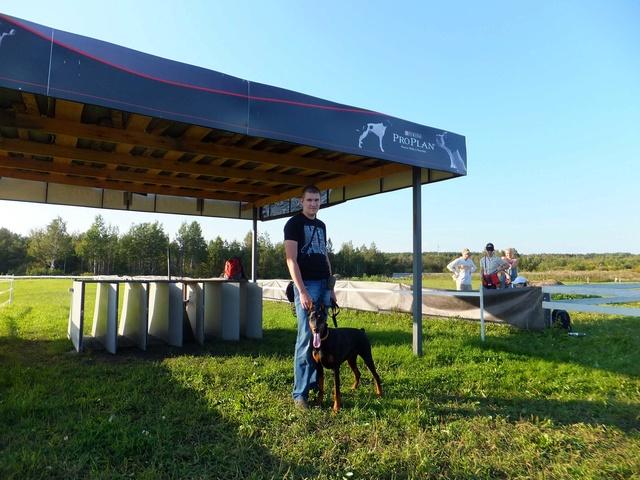 Курсинг. Собачий спорт Dscf7710