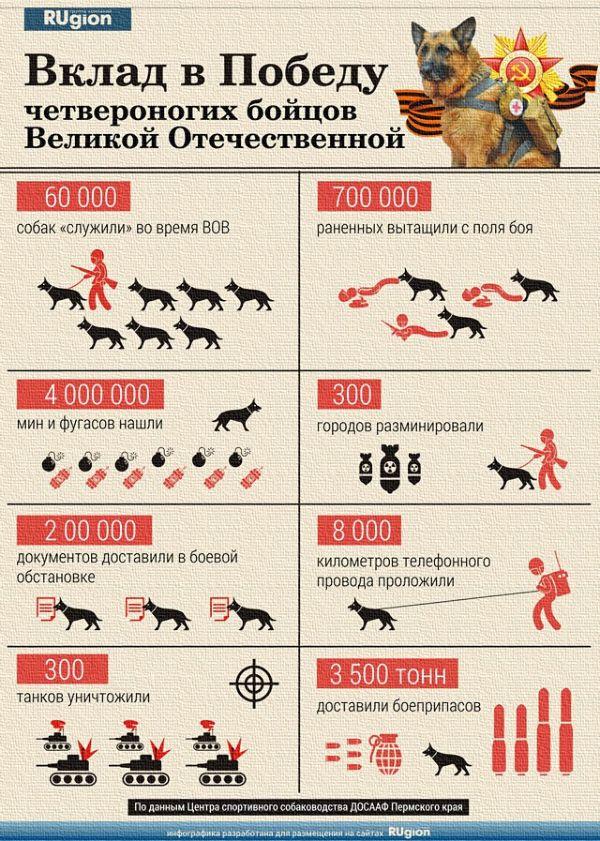 BaDoGood плохая-хорошая собака - Портал Womfdk10