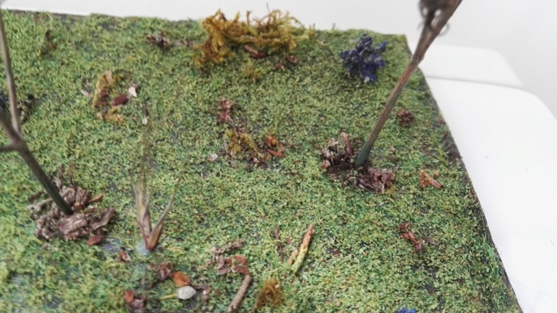 A l'orée de la forêt Img_2025