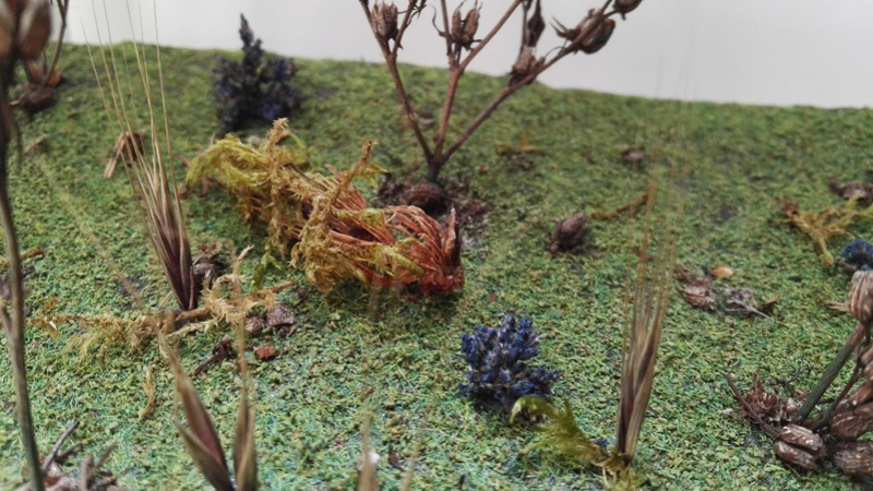A l'orée de la forêt Img_2026