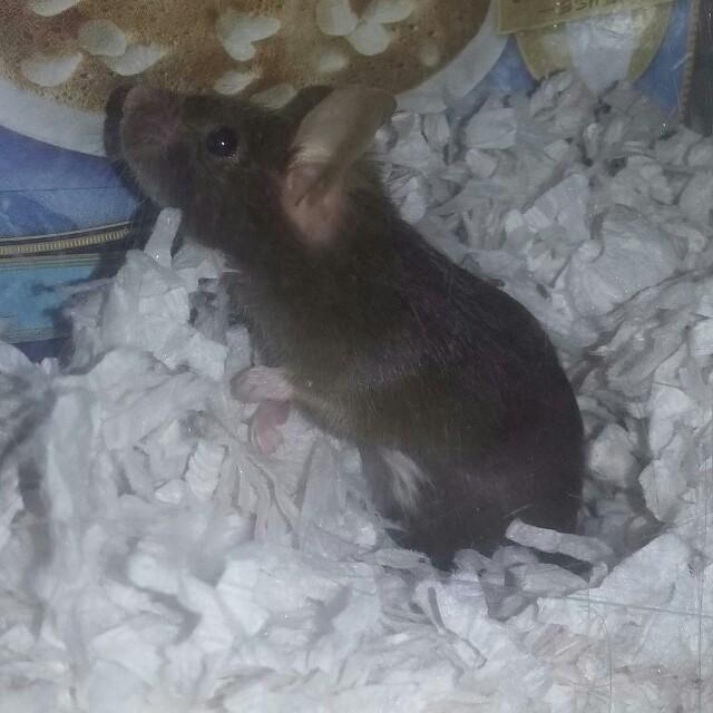 Three New Mice Img_2010