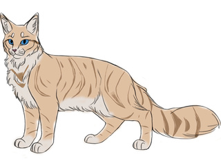Bella of Skyclan Sunfli12