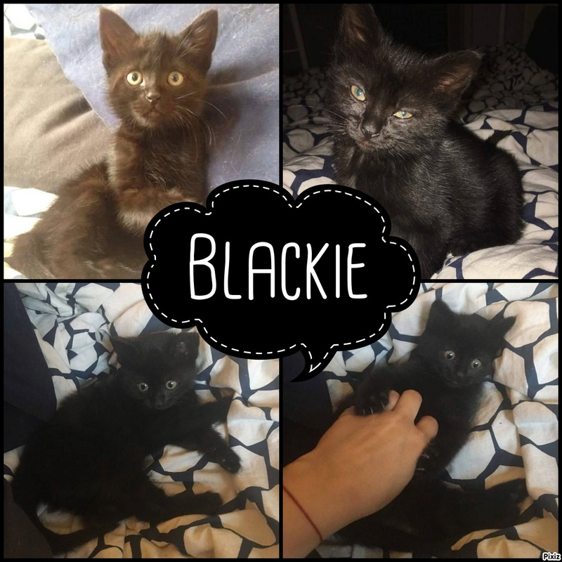 Blackie - Pixiz-21