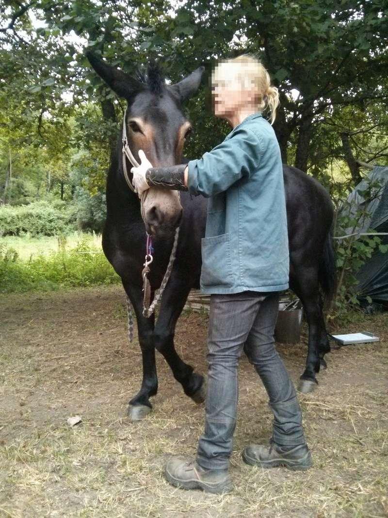 VIOLETTE dite PETALE - ONC Mule née en 2006 - adoptée en octobre 2012 par Jean Img_2010