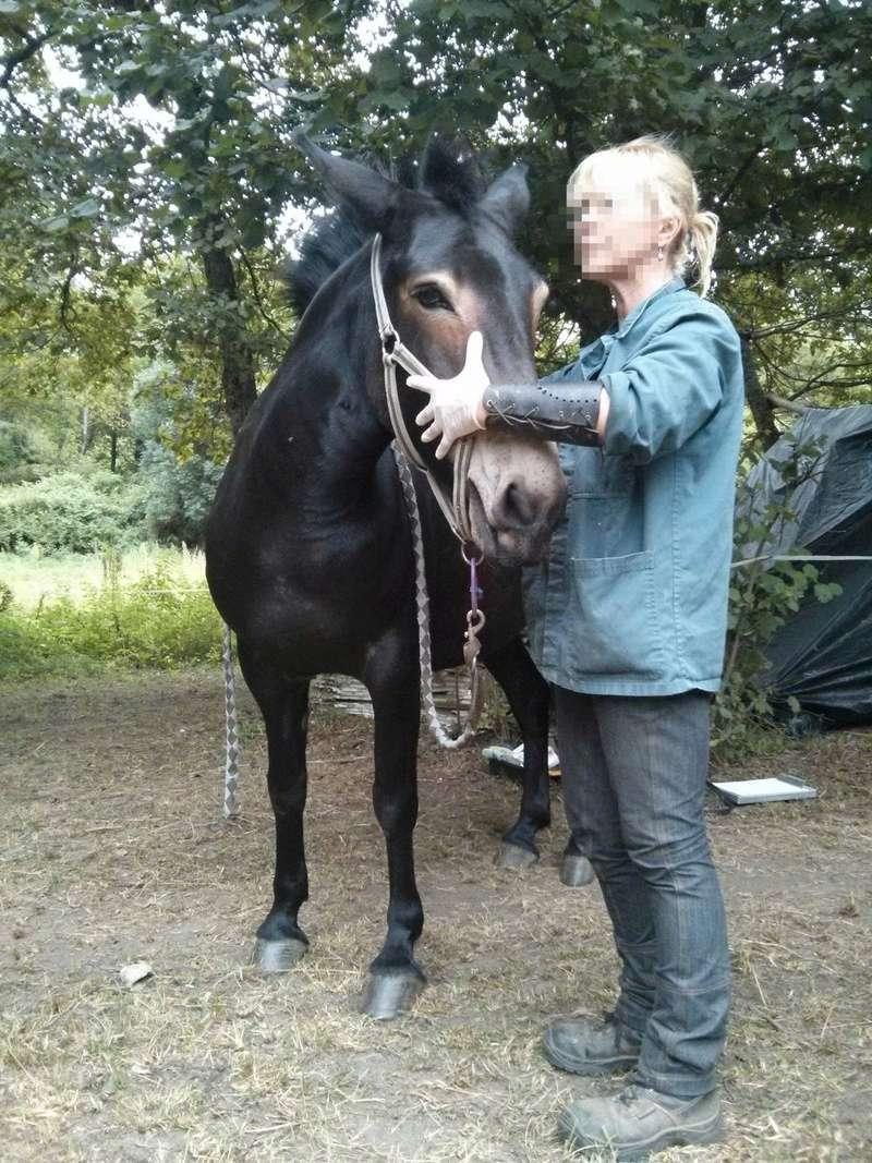 VIOLETTE dite PETALE - ONC Mule née en 2006 - adoptée en octobre 2012 par Jean Img_2011