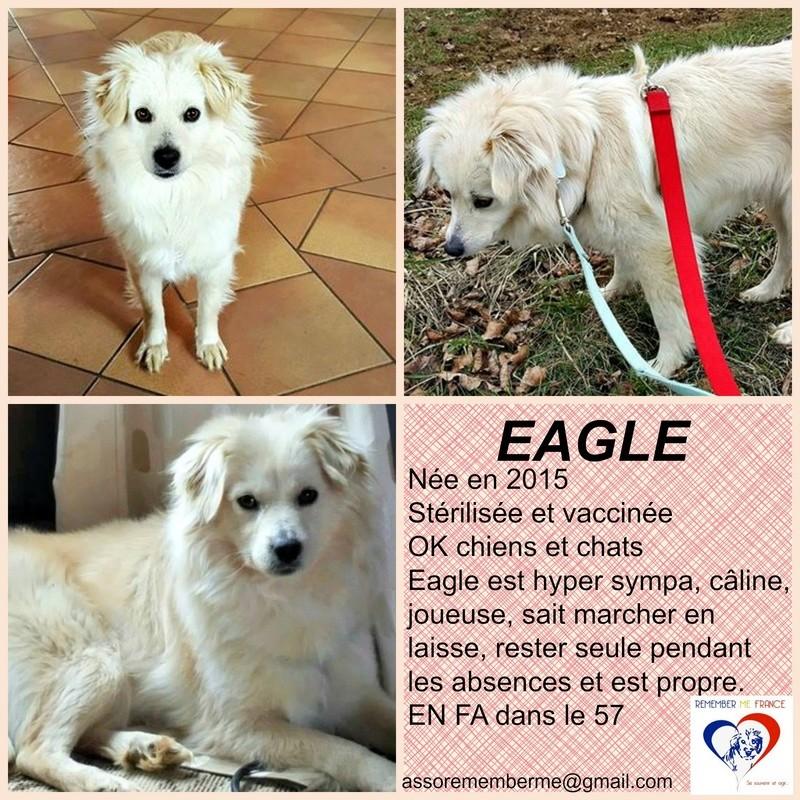 EAGLE - femelle croisée de taille petite à moyenne, née environ septembre 2015 - (Pascani) REMEMBER ME LAND/ADOPTEE par Isabelle (57) - Page 3 Eagle10