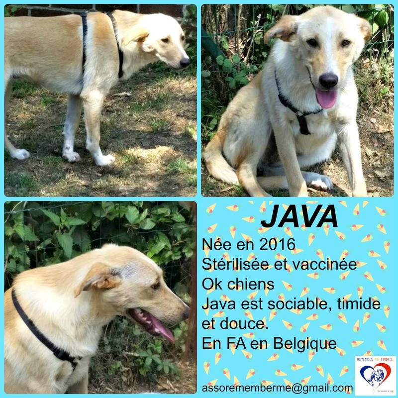 JAVA - femelle, croisée, née aout 2016 - ( Pascani ) - En FA chez pinpin (belgique) - Page 2 Java10