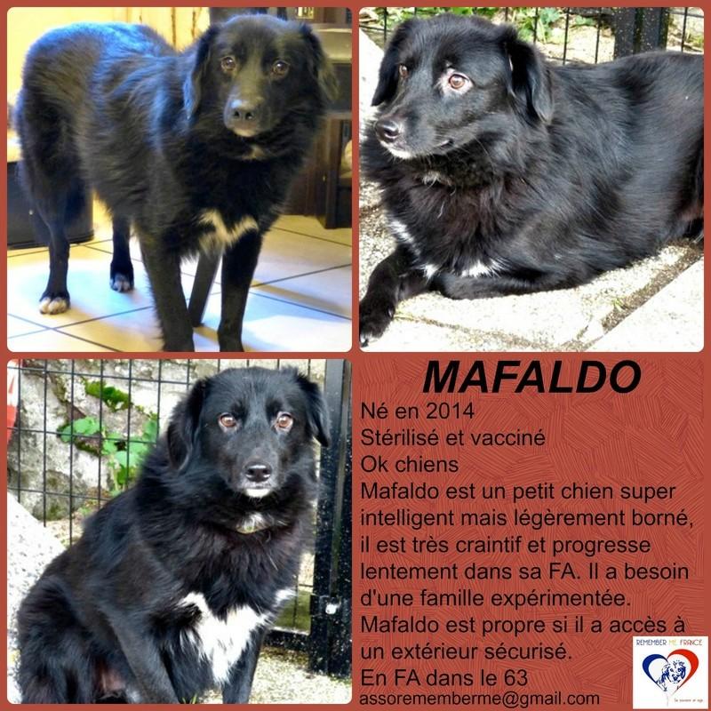 MAFALDO - Mâle croisé, petite taille (PASCANI) - Adopté par Irène (74) - Page 11 Mafald10