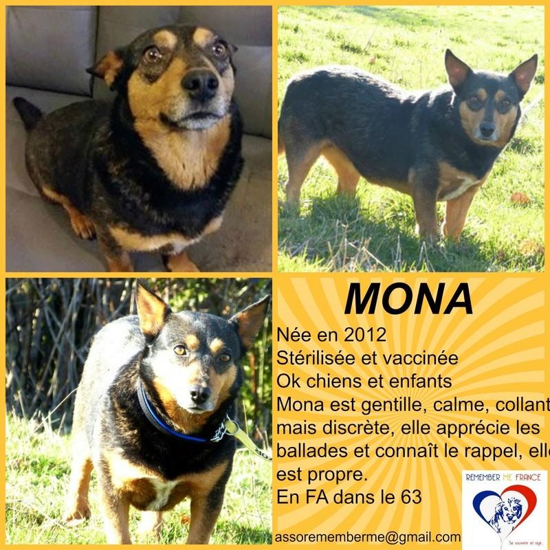 MONA, femelle, croisée, petite taille née env 2012 (Pascani)- adoptée par Lucienne (63)  - Page 5 Mona10
