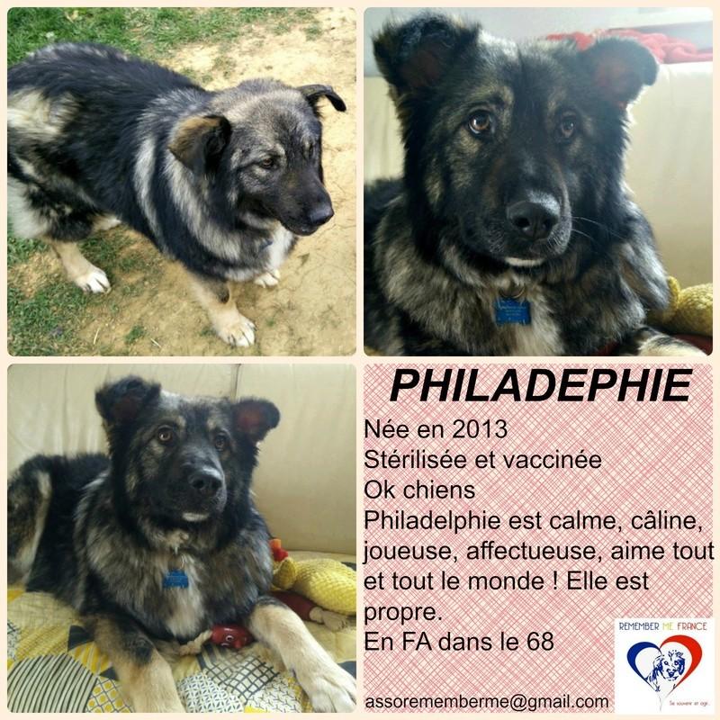 PHILADELPHIE, femelle - taille moyenne - née environ en 2013 (Pascani)- adoptée par Denis (67) - Page 2 Philad10