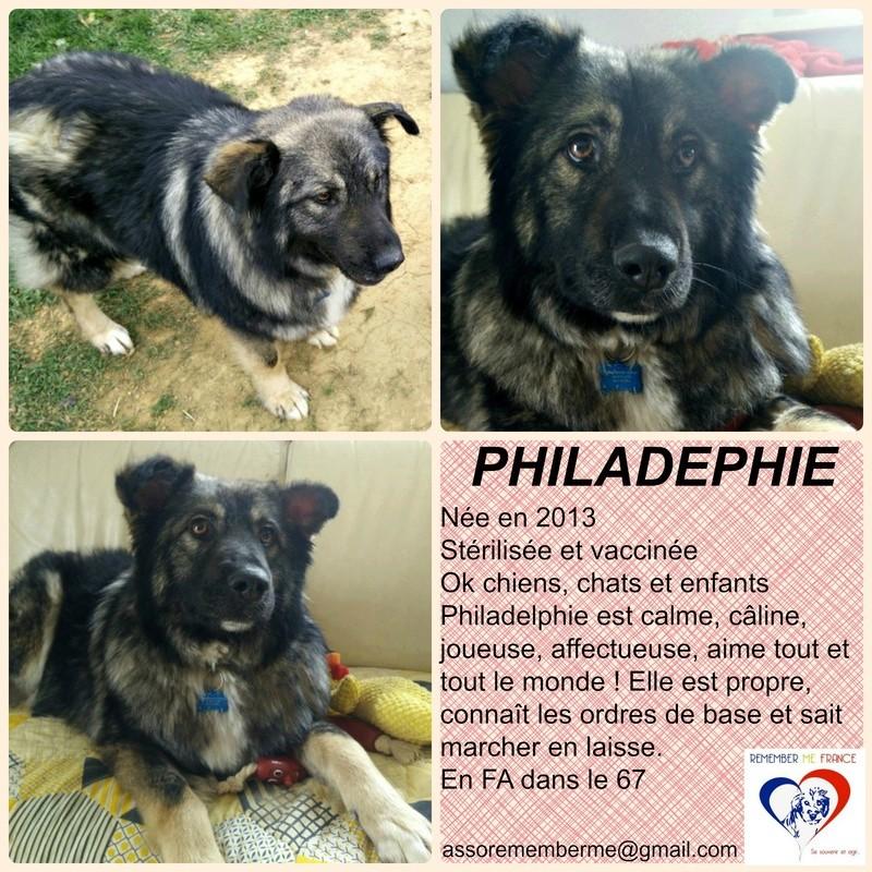 PHILADELPHIE, femelle - taille moyenne - née environ en 2013 (Pascani)- adoptée par Denis (67) - Page 2 Philad11