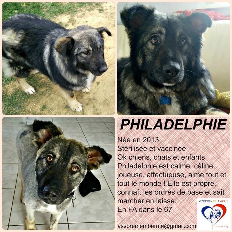 PHILADELPHIE, femelle - taille moyenne - née environ en 2013 (Pascani)- adoptée par Denis (67) - Page 3 Philad12