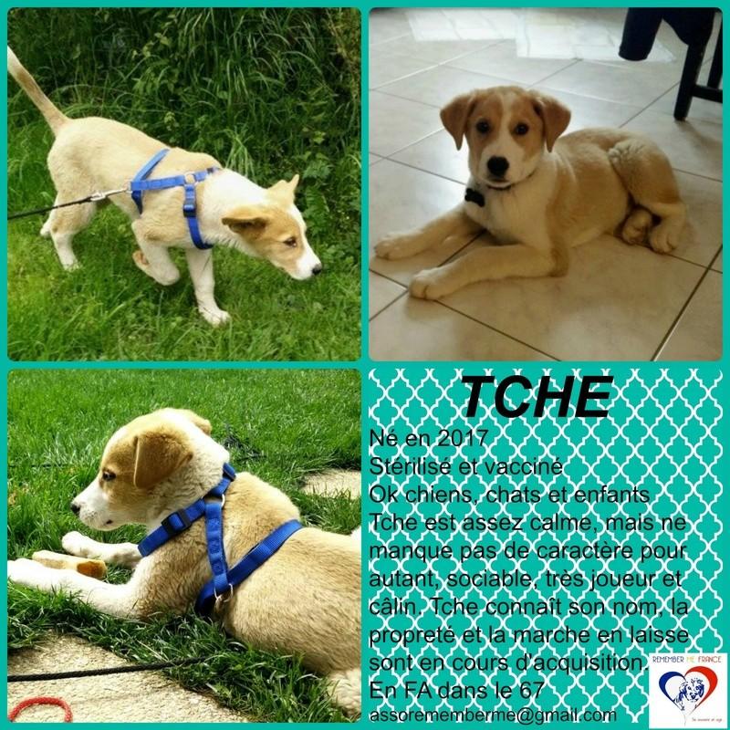 TCHE - chiot mâle, taille moyenne, né en février 2017 - REMEMBER ME LAND - Adopté par Lionel et Sarah (67) Tche10