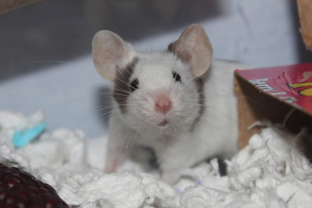 More mousie pictures! Img_6012