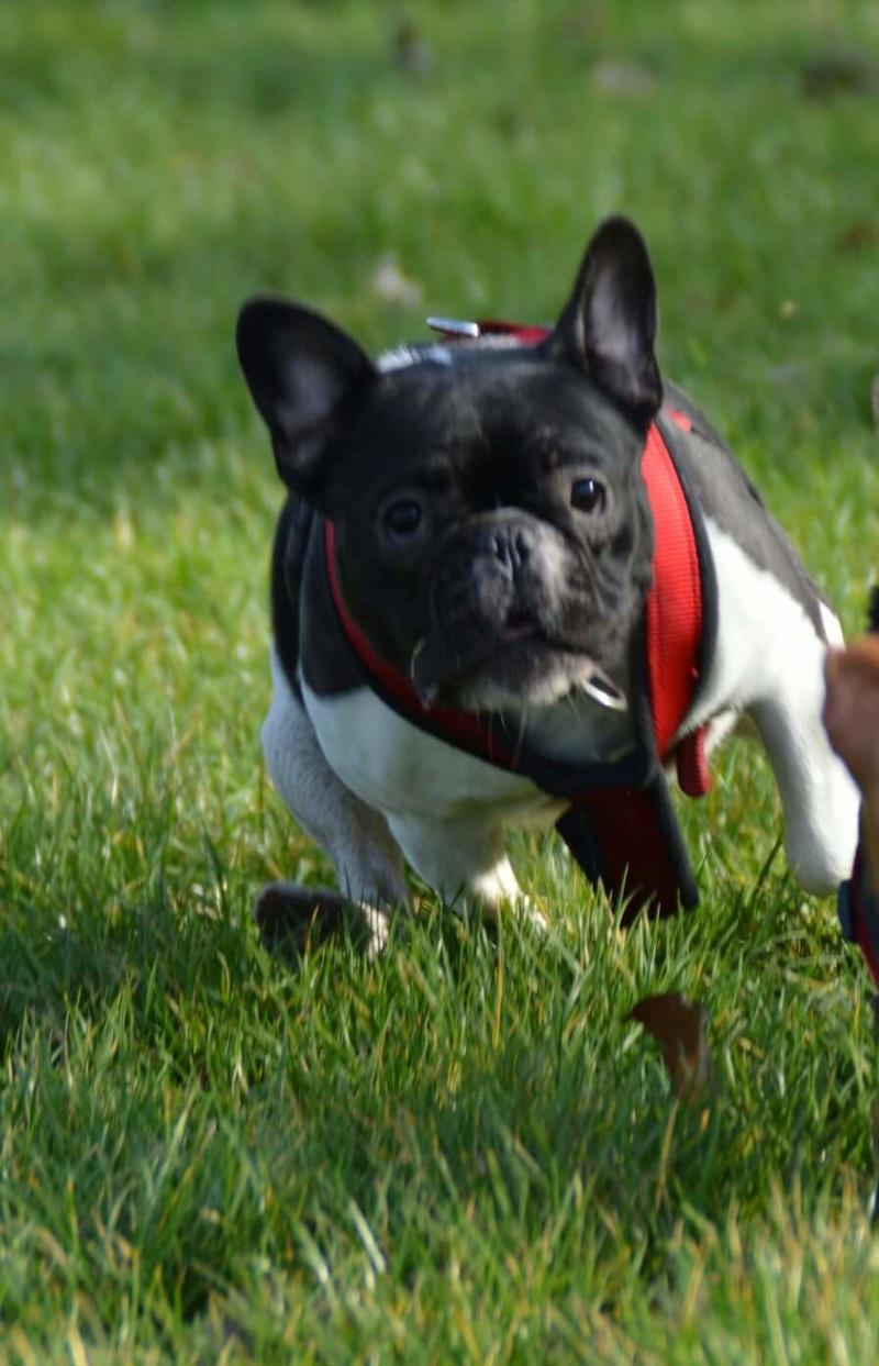 Ein Herz für Haustiere Forum - Portal Fb_img10