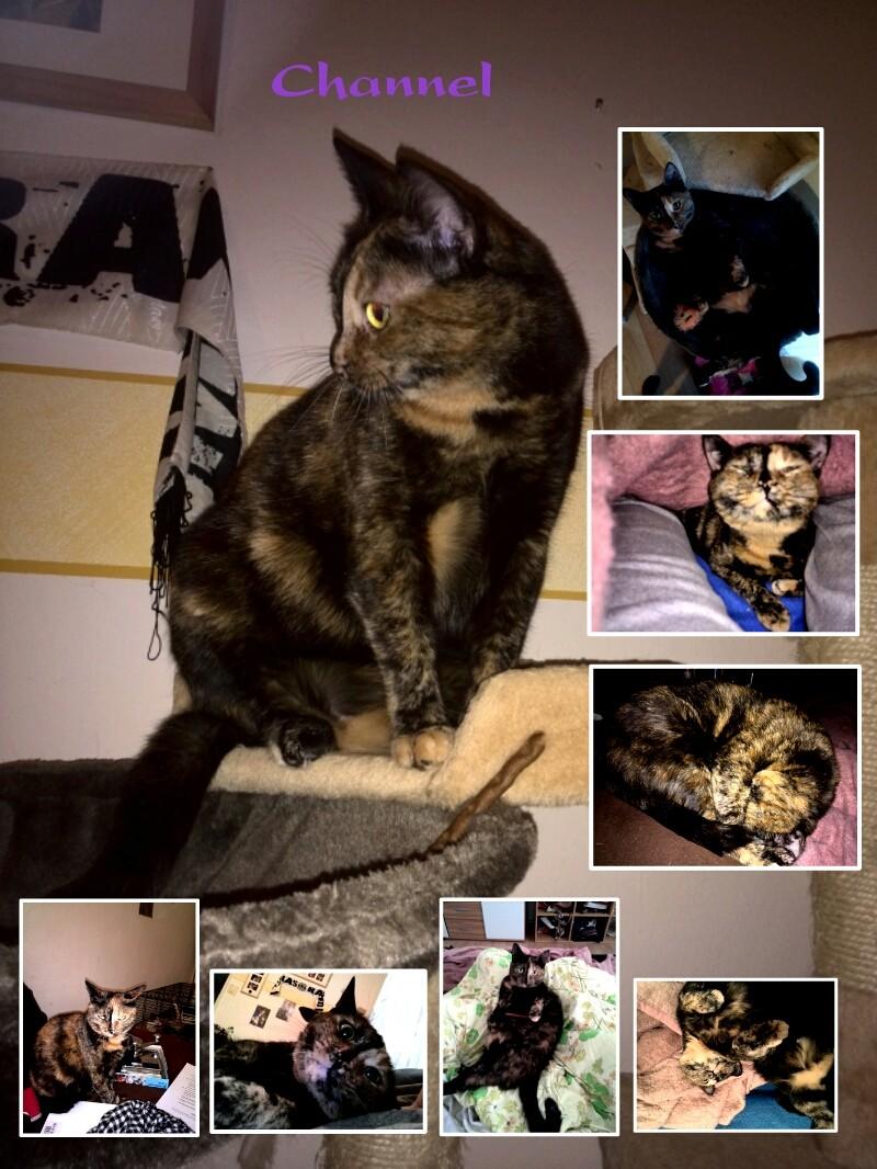 Meine Katze Channel Img_2010
