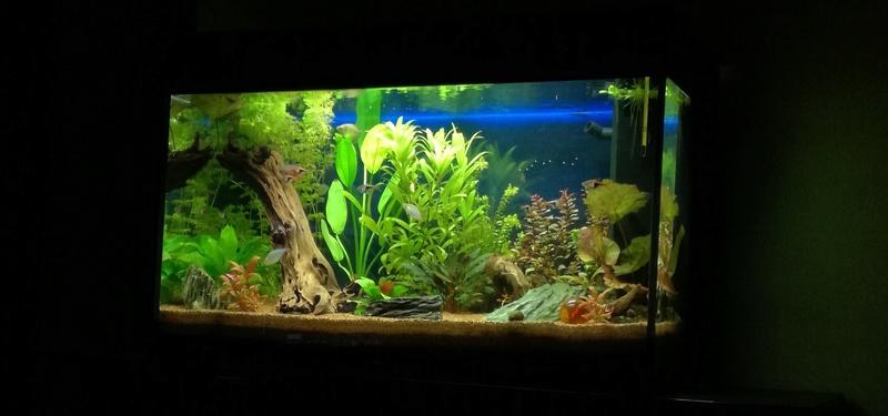 Nouveau dans l'aquariophilie : Juwel Rio 125 Aqua_b10