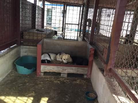 ZORHA, F-X, 25KG, née 2012 (ORASTIE/FOURRIERE) Prise en charge Ferme des Rescapés Fb_i1575