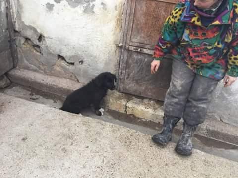 NINA, F-X berger roumain, née 11/2016 (RUE ORASTIE) Prise en charge Ferme des rescapés Fb_im485