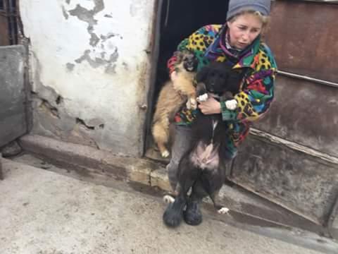 NINA, F-X berger roumain, née 11/2016 (RUE ORASTIE) Prise en charge Ferme des rescapés Fb_im933
