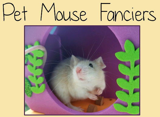 Pet Mouse Fanciers