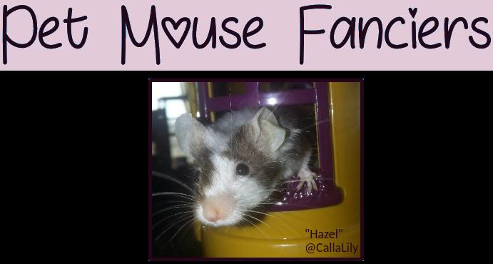 Pet Mouse Fanciers