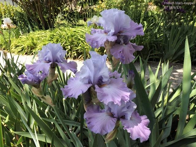 ces quelques fleurs de nos jardins Dscf2823