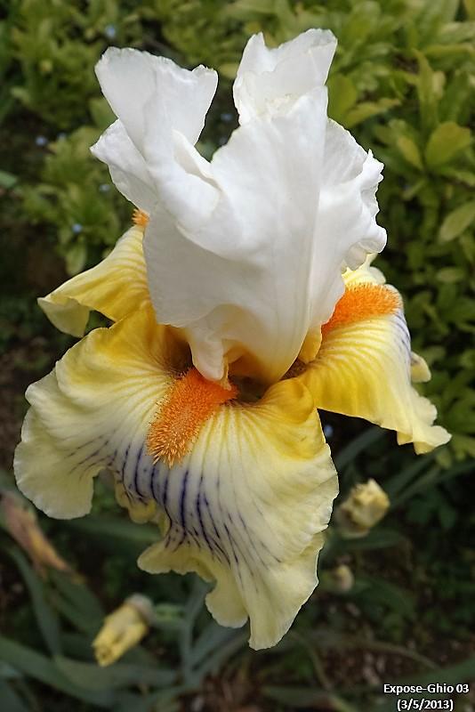Iris 'Expose' - Joseph Ghio 2003 Expose10