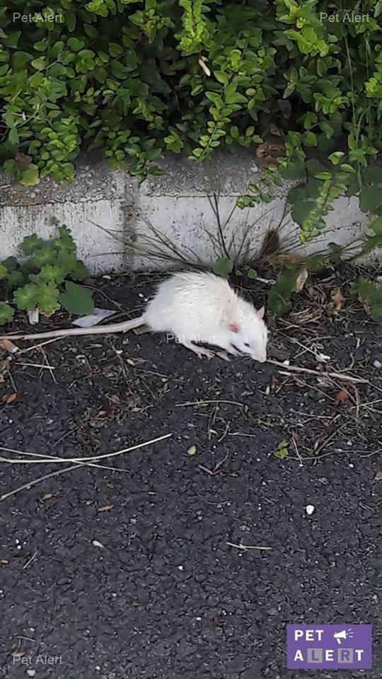 Nuts sorti de la rue Rat12
