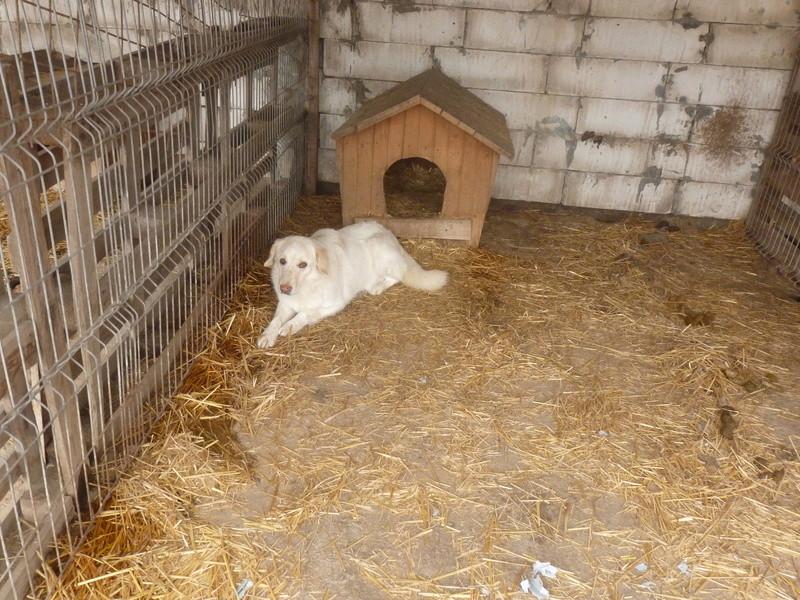 BALANUCH, mâle croisé berger sauvé de Pallady, né en 2009 parrainé par Nathalie G. -Gage Coeur  Myri_Bonnie-SC-R-SOS- P1010036