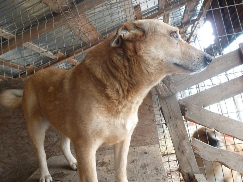 BAILEYS, née en 2011, sauvée de l'équarrissage - parrainée par Nathalie -SOS-R-SC - Page 2 P1010132