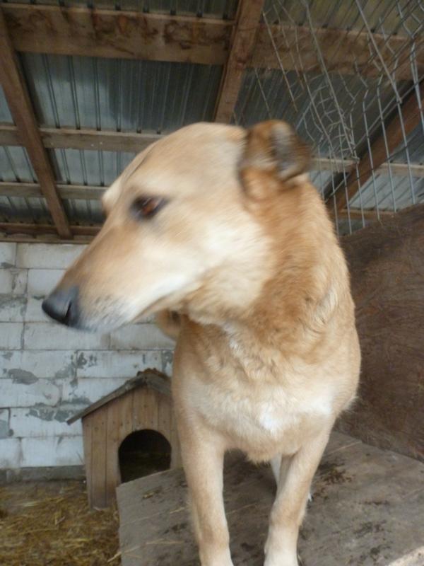 BAILEYS, née en 2011, sauvée de l'équarrissage - parrainée par Nathalie -SOS-R-SC - Page 2 P1010134
