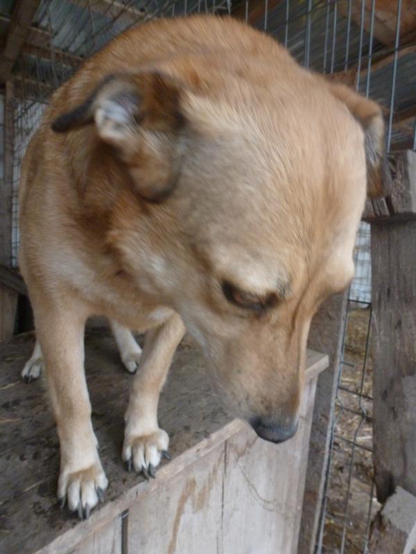 BAILEYS, née en 2011, sauvée de l'équarrissage - parrainée par Nathalie -SOS-R-SC - Page 2 P1010135