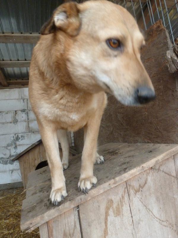 BAILEYS, née en 2011, sauvée de l'équarrissage - parrainée par Nathalie -SOS-R-SC - Page 2 P1010136