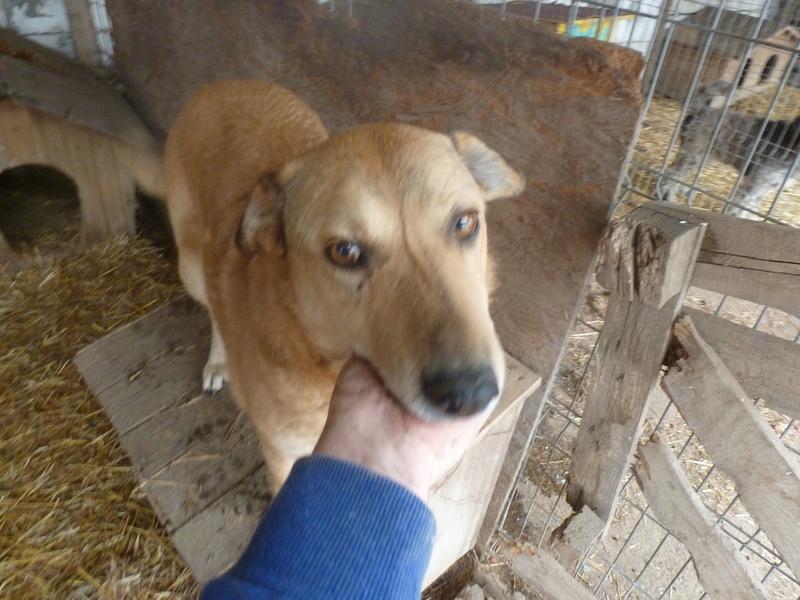 BAILEYS, née en 2011, sauvée de l'équarrissage - parrainée par Nathalie -SOS-R-SC - Page 2 P1010137
