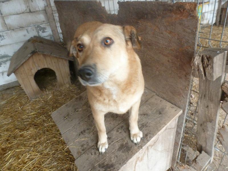 BAILEYS, née en 2011, sauvée de l'équarrissage - parrainée par Nathalie -SOS-R-SC - Page 2 P1010138