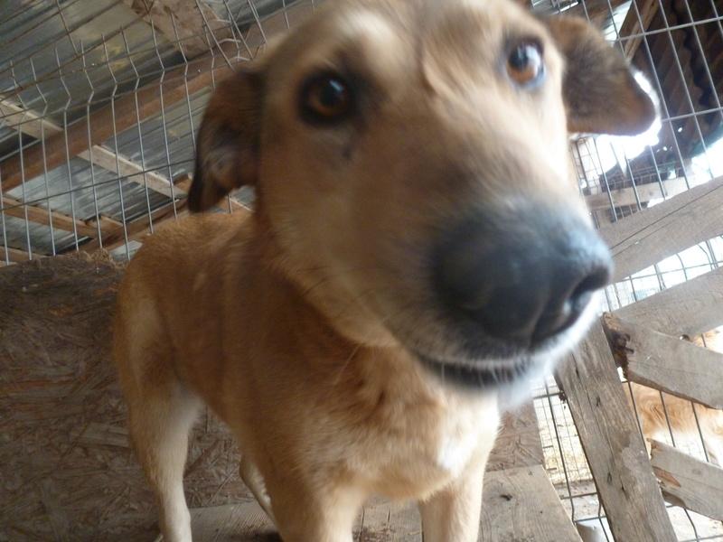 BAILEYS, née en 2011, sauvée de l'équarrissage - parrainée par Nathalie -SOS-R-SC - Page 2 P1010139