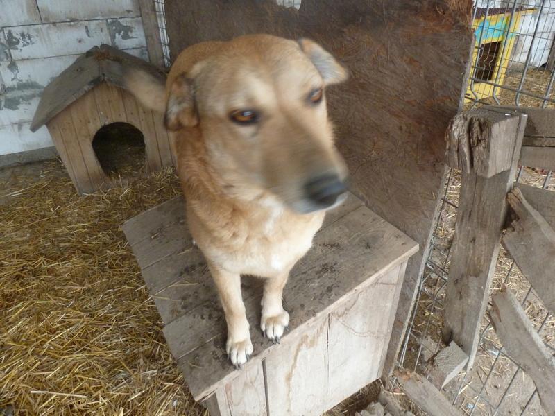BAILEYS, née en 2011, sauvée de l'équarrissage - parrainée par Nathalie -SOS-R-SC - Page 2 P1010140