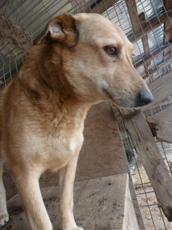 BAILEYS, née en 2011, sauvée de l'équarrissage - parrainée par Nathalie -SOS-R-SC - Page 2 P1010142
